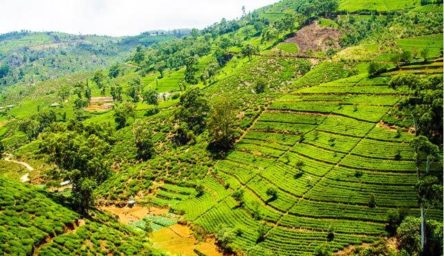 Viaje a Sri Lanka Semana Santa