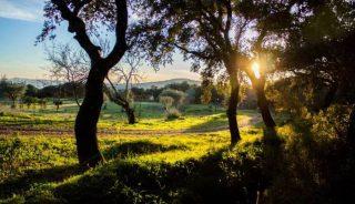 Viaje a Andalucía. Fin de Año