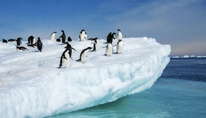 Viaje a Antártida a medida