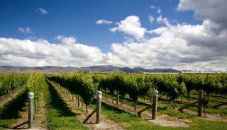 Blenheim Viñedos Nueva Zelanda