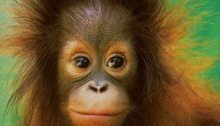 Charla: Descubre Borneo y sus increíbles atractivos con Carlos Monforte