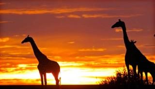botswana-sudafrica-zimbawe-zambia-tren-taranna001-