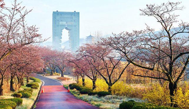 Viaje a Corea del Sur. En Grupo