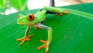Viaje a Costa Rica. Fotográfico con Quim Dasquens
