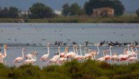 Aves y paisajes del Delta del Ebro