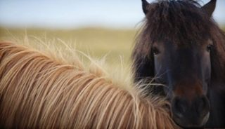 Viaje a Islandia verano