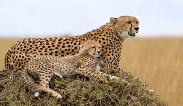 Viaje a Kenya. A medida con extensiones opcionales