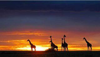 Viaje a Kenia y Mauricio