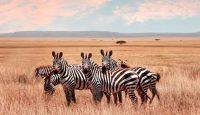 Viaje a Kenia. Semana Santa