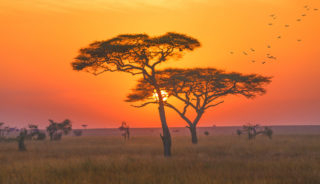 Viaje a Kenia, Tanzania y Zanzíbar. En grupo. El sueño de África premium en camión