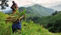Viaje a Laos. A Medida. Norte