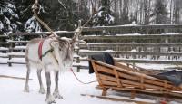 laponia-finlandesa-navidad-005