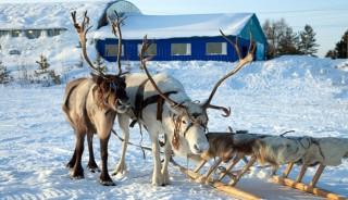 laponia-finlandesa-punte-diciembre-002