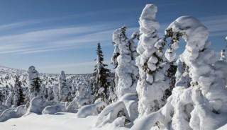 Viaje a Laponia Finlandesa en navidad