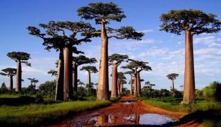 Charla: Ven a conocer nuestros viajes a Madagascar con Gerardo Shulman