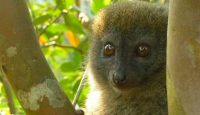 Viaje a Madagascar. Andasibe, Pangalanes, Sur e Ifaty