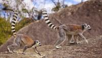 Viaje a Madagascar A medida