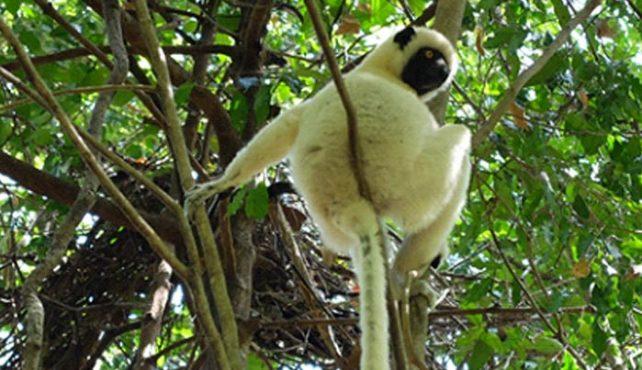 Viaje a Madagascar
