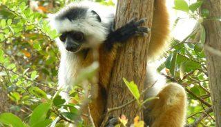 Viaje a Madagascar. A medida. Ruta