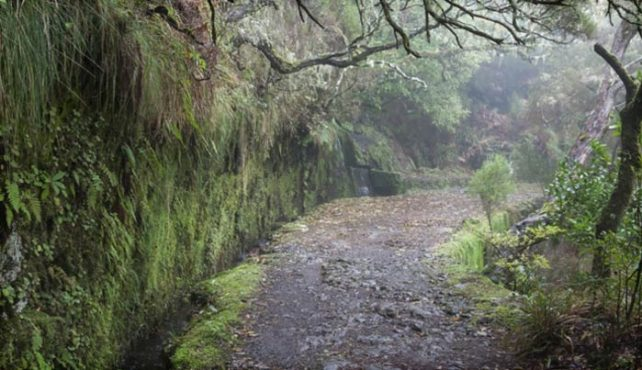 Viaje a Madeira. Especial Senderismo