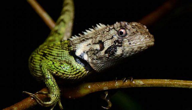 Viaje a Perú. Costa, Andes y Selva Amazónica