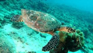 Viaje de voluntariado Seychelles