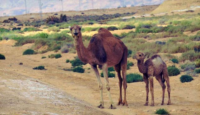 Viaje a Túnez
