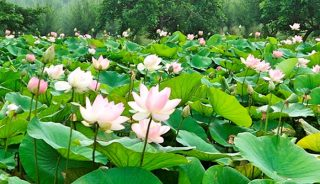 Viaje a Tailandia. Retiro de Mindfulness