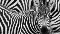 Viaje a Tanzania. Semana Santa. Classic Safari en 4x4