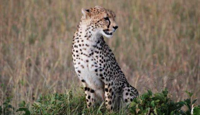 Viaje a Kenia, Tanzania y Zanzíbar. En camión especial fin de año