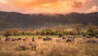 Viaje a Tanzania. A medida. Atardecer en la gran sabana