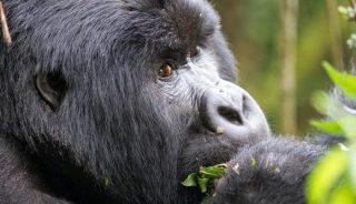 Viaje a Uganda, Rwanda y Zanzíbar. Gorilas en la niebla en camión