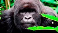 Viaje a Uganda, Rwanda e Isla de Zanzíbar. Gorilas en la niebla. Especial fin de año. 12 o 17 días