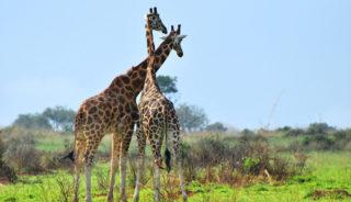 Viaje a Uganda. En grupo. La perla de África