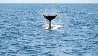 Viaje a Andalucía. Grupo verano. En busca de ballenas y linces. Doñana y el estrecho