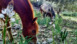 Viaje a Andalucía. A medida. Una semana en el bosque y rutas a caballo