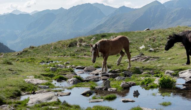Viaje a Andorra. En grupo. Ruta orígenes - cultura de montaña. Salida especial Puente del Pilar