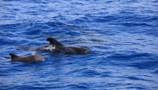 Viaje a Canarias. En familia. Grupo Verano. Biodiversidad canaria