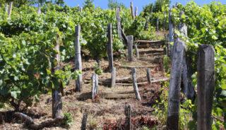 Viaje a Asturias. Grupo verano. Una experiencia auténtica y de bienestar con Edgar Tarrés