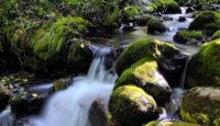 Viaje a Asturias. Grupo verano. Parques y Reservas Naturales