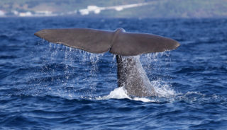 Viaje a Azores. Singles. Viaja solo. Senderismo en la isla de Terceira