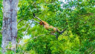 Viaje a Borneo. Grupo Verano. Naturaleza en estado puro con Carlos Monforte