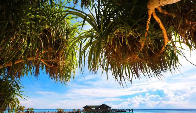 Viaje a Borneo grupo verano