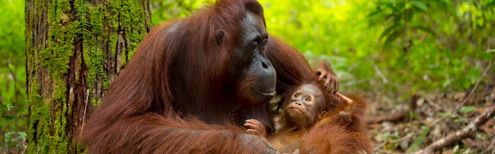 Viaje a Borneo. 11 Ago.