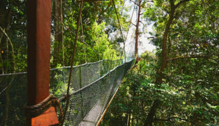 Viaje a Borneo. Navidad. Naturaleza en estado puro con Carlos Monforte