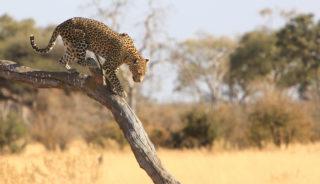 Viaje a Botswana y Cataratas Victoria en camión