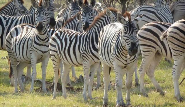 Viaje a Botswana y Cataratas Victoria. En camión