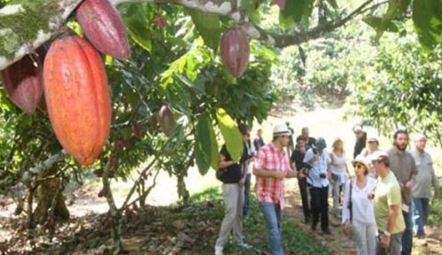 Viaje a Brasil. Ruta del Chocolate