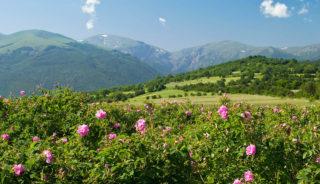 Viaje vegano a Bulgaria. En grupo. Tradición búlgara con sabor vegano