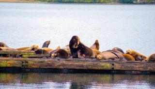 Canadá - Pacific Rim National Park